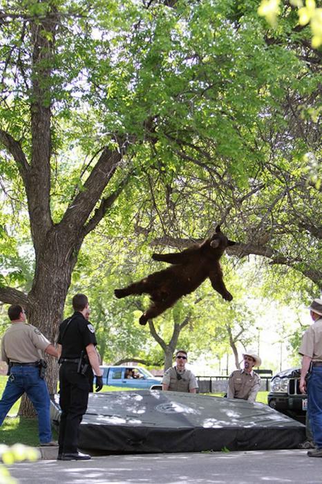 Un oso poco afortunado