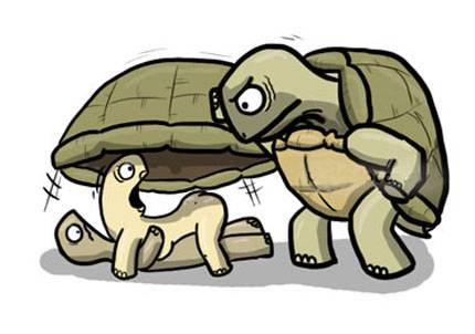 tortuga-infiel